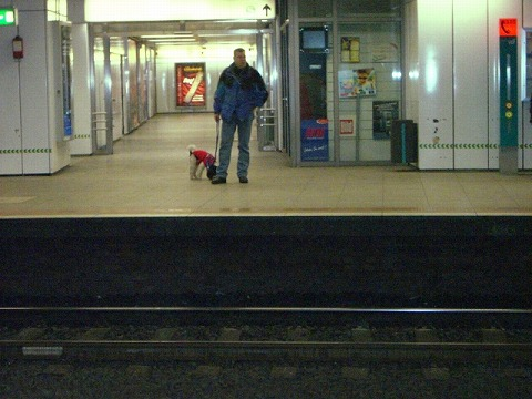 地下鉄イヌ